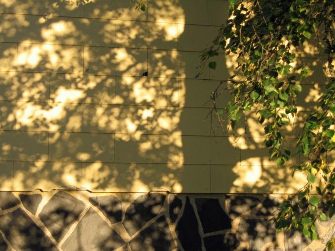 2015_05_01_Toukokuun kuvamiete_puun varjo_PHA