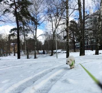 2017_02_23_blogi_latte-kavelylla_1_img_5088