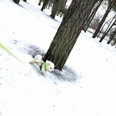 2017_02_23_blogi_latte-kavelylla_5_pha_img_5122